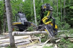 Franks Logging - Timber Harvesting